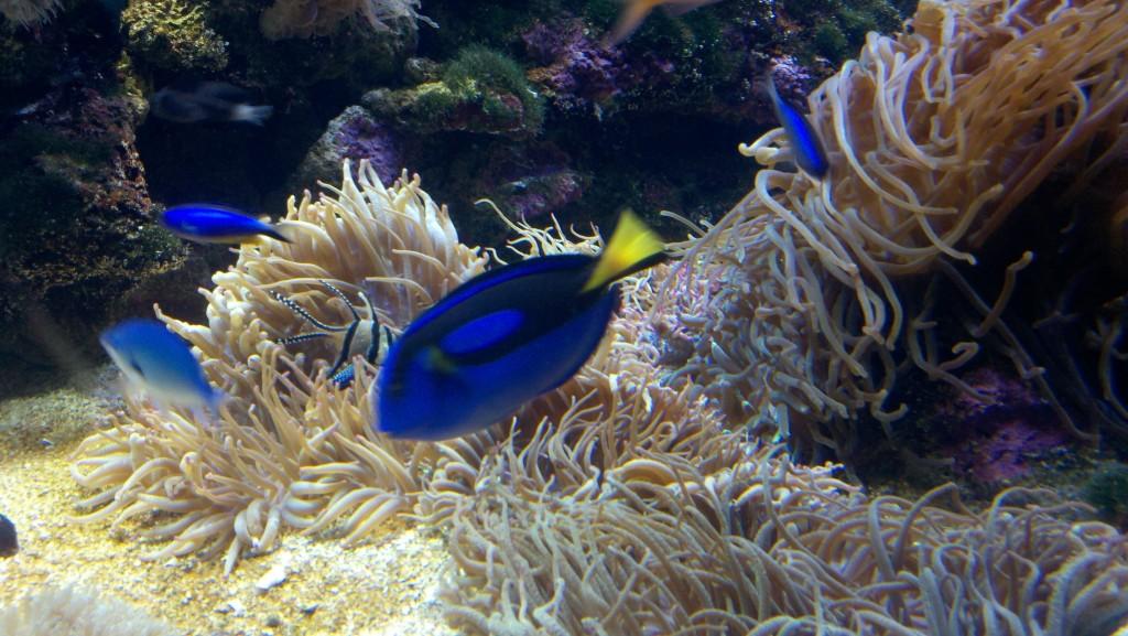 Dory from Finding Nemo!